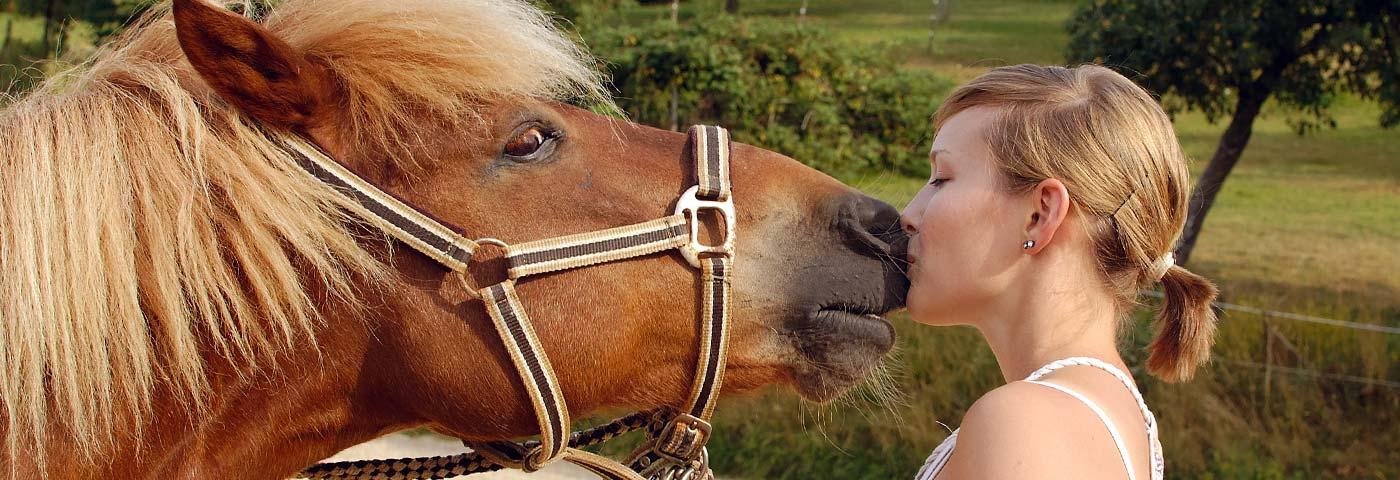 Ponyhof Nachbar Pferdekuss
